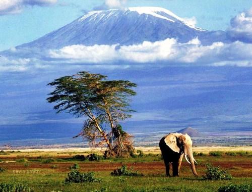 Tanzania Wildlife & Landscape