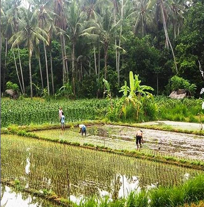 Bali Sawah Subak irrigatie