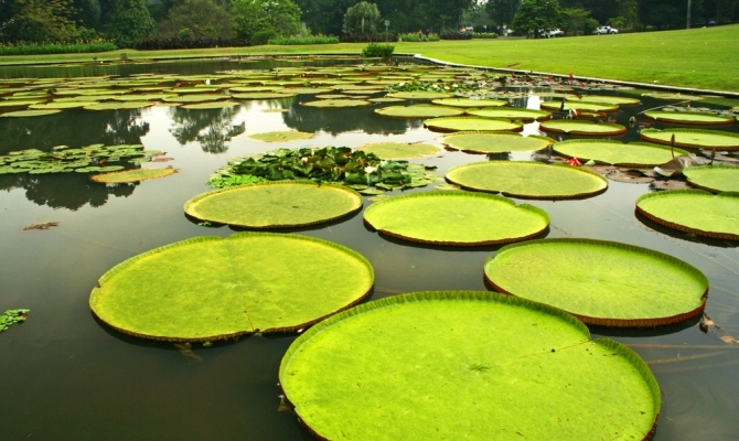 Bogor kebun raya